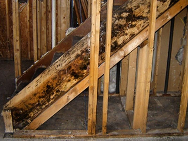 restoration, mold,mold removal, mold remediation, mold testing, mitigation, cleanup, damage, insurance, contractor, claims, Chicago, rainbow international restoration, loss, restore, basement, attic, crawlspace