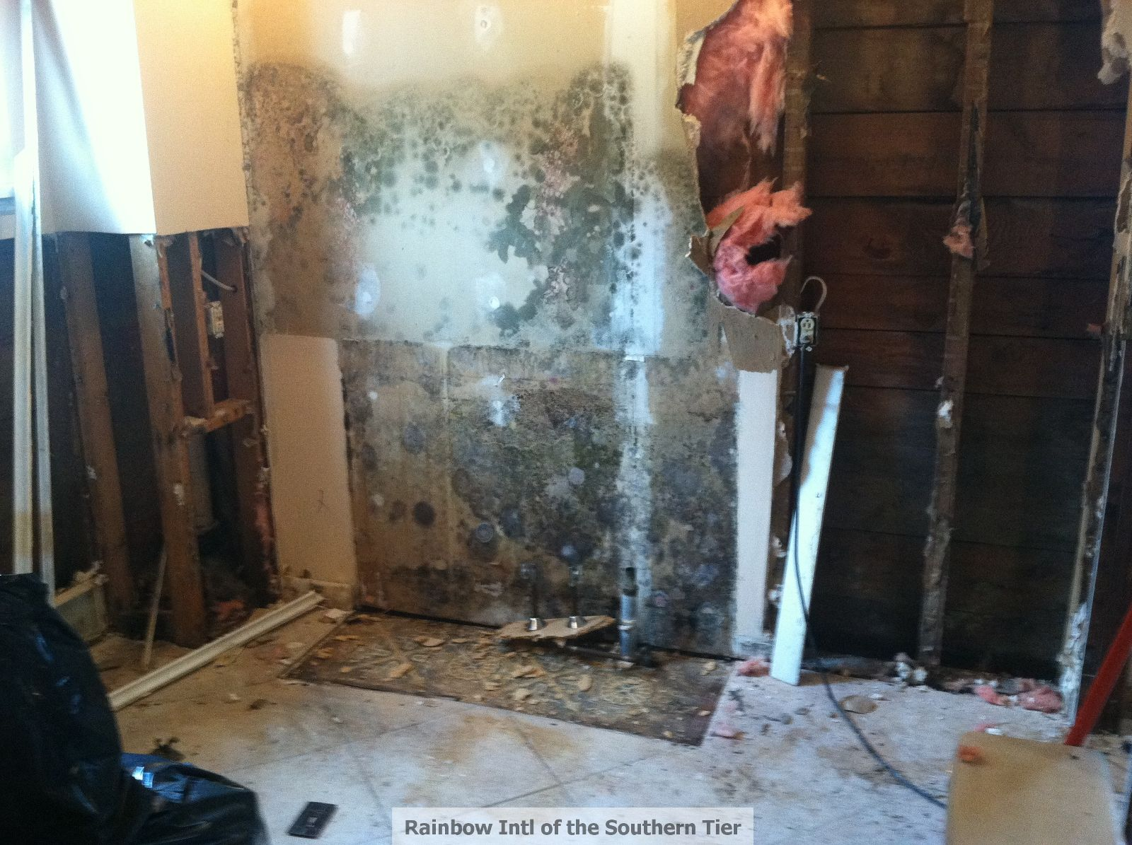 Water/Mold Damage