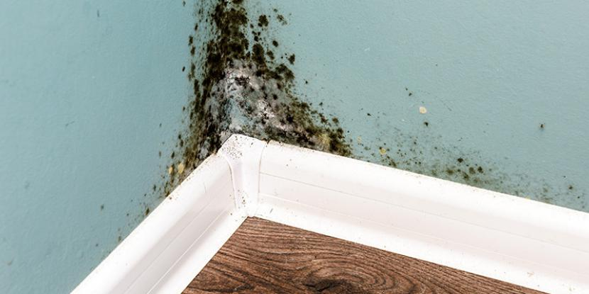 Can you live in a house during mold remediation? Learn about safe mold remediation practices and how we keep your family safe during the process.