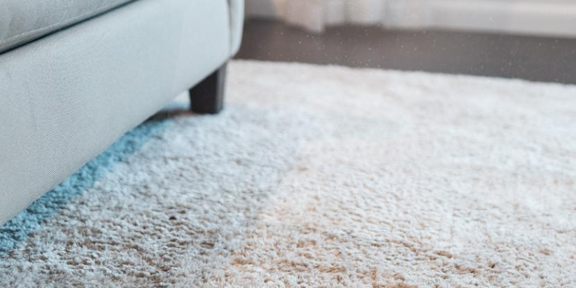 Dust mites in carpet can aggravate asthma and allergy symptoms. Learn how to remove dust mites from carpet with help from Rainbow International.