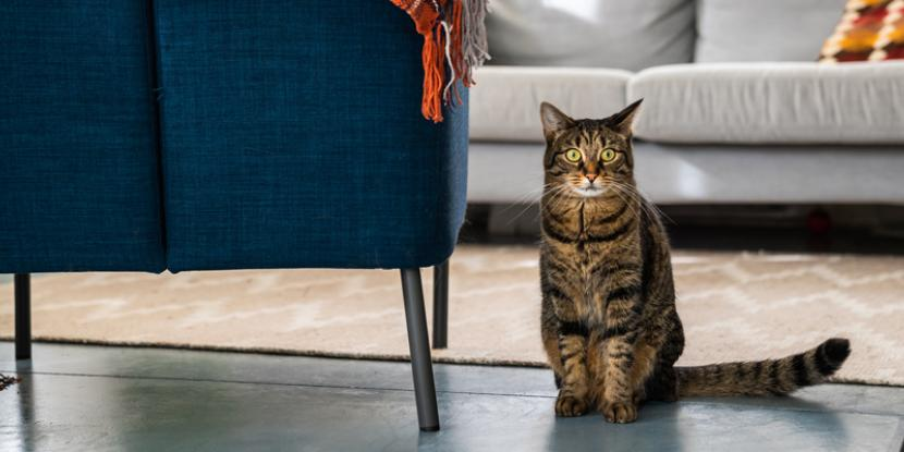Is your feline friend spraying or excessively scratching? Learn why cats mark their territory and how to stop a cat from marking in your home.