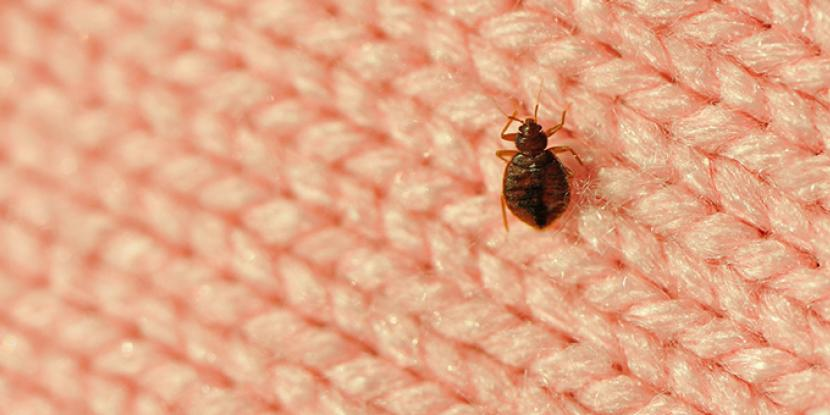 Do you know what to do if you have bed bugs? Rainbow International will show you how to check for bed bugs in your home and how to get rid of them.