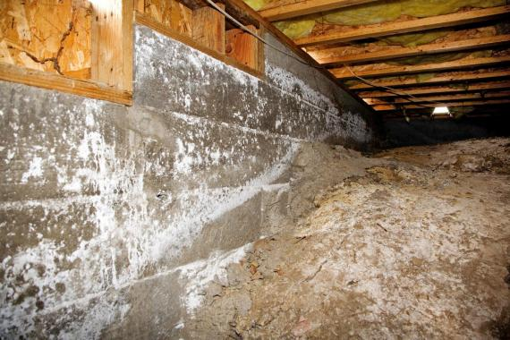 Picture of crawlspace mold