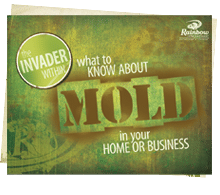 The Invader Within: What to Know About Mold in Your Home or Business